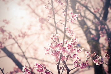 Vintage Cherry blossom background