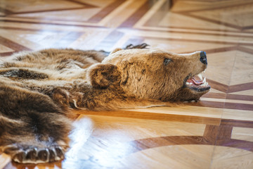 Skin killed bear