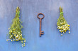 summer key for healthy life - chamomile flower on wall