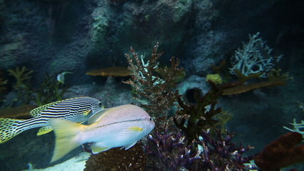 Tropical Fish and Coral Reef in aquarium