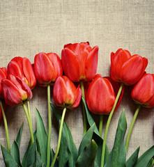 Tulip flowers on canvas