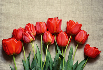 Tulip flowers on canvas