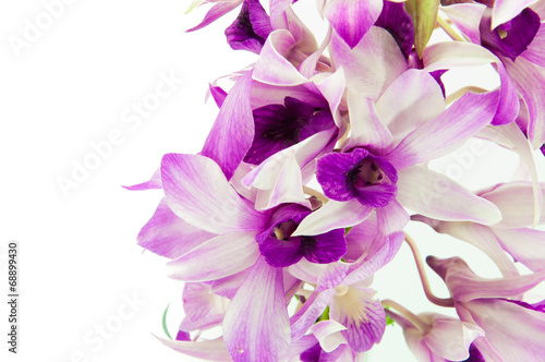 Violet orchid isolated on white background
