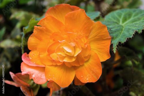 canvas print picture Details of an orange flower
