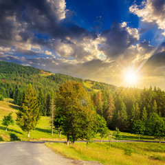 going to coniferous forest at sunset
