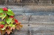 canvas print picture - buntes Laub Holz Hintergrund