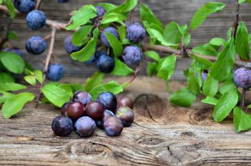 Schlehdorn Beeren auf Holz