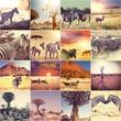 Fototapete Tier - Afrikanisch - Säugetiere