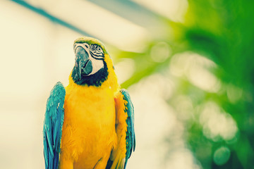 Beautiful blue and yellow macaw parrot