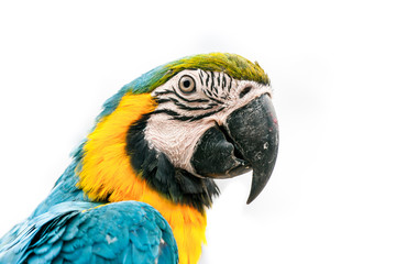 Portrait of a macaw parrot