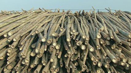 Bamboo rafts. Bamboo cane tied on pile (2)