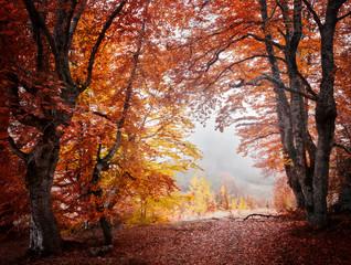 Autumn beautiful forest