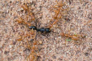 Ant life.