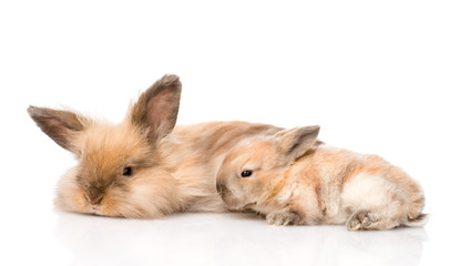 adult rabbit and newborn bunny. isolated on white background