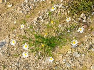 Trockener Matsch Mit Blumen