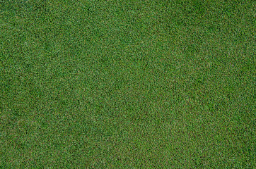 Golf Fringe Grass Close Up