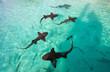 Nurse sharks - 68912613