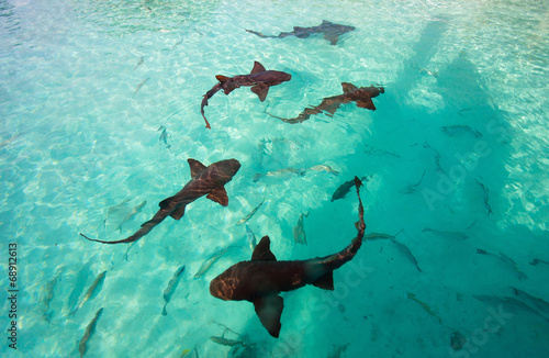 Papiers peints Recifs coralliens Nurse sharks
