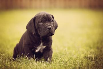 adorable black puppy looking sad