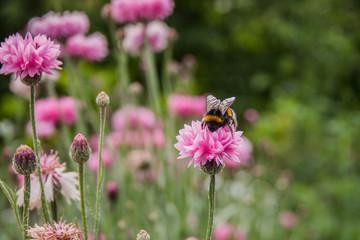 Giardino Botanico Dublino