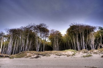Coastal Landscape of the Baltic Sea