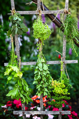 Set of herbs hanging and drying