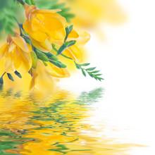 Wiosna żółty pierwiosnek i wody, kwiatów w tle