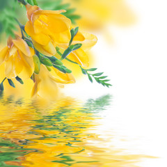 Spring yellow primrose and water, floral background