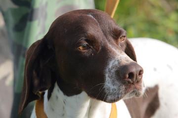 addestramento cane per ricerca tartufo