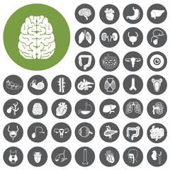 Human organs Flat design icons set. Illustration eps10
