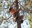 little cute boy climbing on tree - 68920236