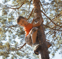 little cute boy climbing on tree