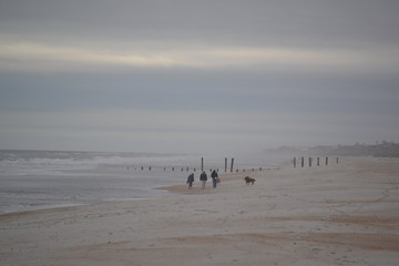 Family Walking Dogs on Beach - Blustery Day