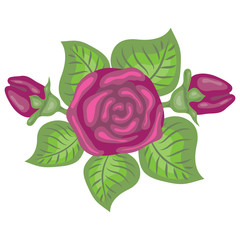 beautiful illustration of pink rose
