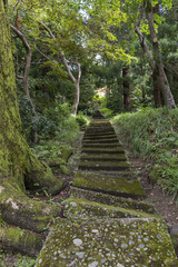 Steps in the botanical garden in Batumi