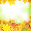 canvas print picture - Autumn background with maple leaves