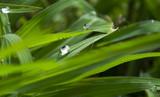 Wassertropfen in einem grünen Traum