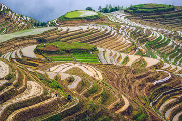Rice Terraces in Guilin, Guangxi Province, China