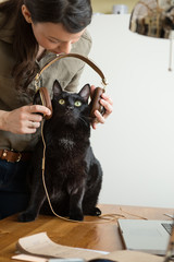 Woman giving headphones cat listen music