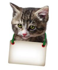 Cat Kitten Blank Card