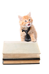 Studious orange kitten with tie