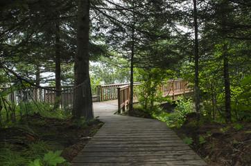 Deep Woods Boardwalk