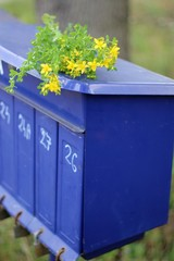 Flowers on the rural blue mailboxes