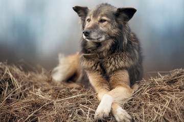 rustic style, a dog asleep on the hay