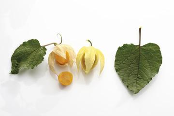 Physalis Früchte ( Physalis peru )