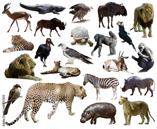 Canvas Luipaard Set of leopard and other African animals.