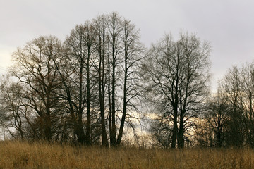autumn trees without leaves panorama view