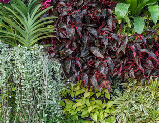 Beautiful foliage garden wall