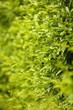 Obrazy na płótnie, fototapety, zdjęcia, fotoobrazy drukowane : Beautiful spring leaves on tree, outdoors
