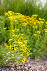 Beautiful wild flowers, outdoors